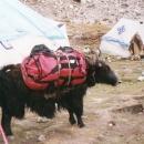 Loading the yaks...