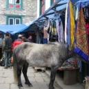 horse-shopping-in-namche2-225x300.jpg
